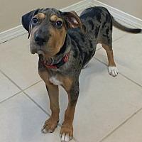 Adopt A Pet :: Bree - Little Rock, AR