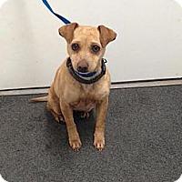 Adopt A Pet :: Janie - Lancaster, VA