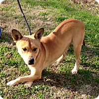 Adopt A Pet :: CHANEY - Leland, MS