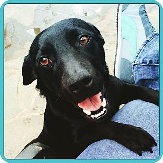 Dachshund/Corgi Mix Dog for adoption in Rochester, New Hampshire - TINK
