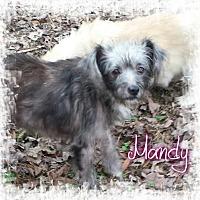 Adopt A Pet :: Mandy - Crandall, GA