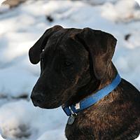 Adopt A Pet :: Ruger - Richmond, VA