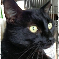Adopt A Pet :: Blackie - Pueblo West, CO