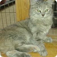 Adopt A Pet :: Fauna - Whittier, CA
