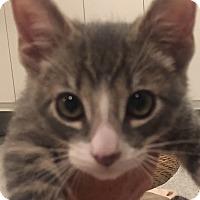Adopt A Pet :: Fitz - Irvine, CA