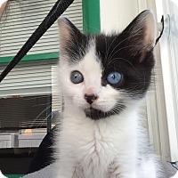 Adopt A Pet :: Sparkle - East Brunswick, NJ
