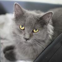 Adopt A Pet :: Fuschia - Manteo, NC