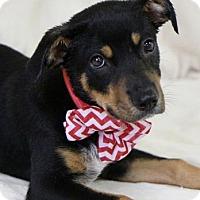 Adopt A Pet :: Brandon - Picayune, MS