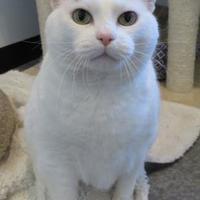 Adopt A Pet :: Fiesta - Menomonie, WI