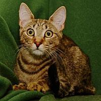 Adopt A Pet :: Leo - Sanford, FL