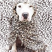 Adopt A Pet :: Beautiful BUNNY-ADOPT Me! - Redondo Beach, CA