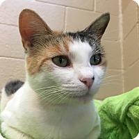 Adopt A Pet :: Mila - Chula Vista, CA