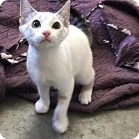 Adopt A Pet :: Athena - Shelbyville, KY