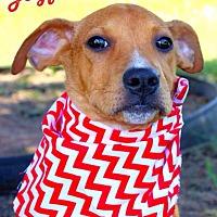 Adopt A Pet :: Joyful - Batesville, AR