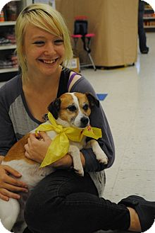 Jack Russell Terrier/Beagle Mix Dog for adoption in Freeport, Maine - Molly - in Maine