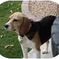 Adopt A Pet :: Dee Dee - Phoenix, AZ