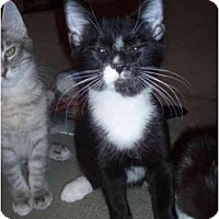 Adopt A Pet :: Tuxedo - Davis, CA