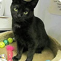 Adopt A Pet :: Annabell - Albany, NY