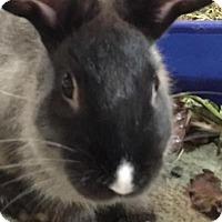 Adopt A Pet :: Bongo - Williston, FL