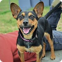 Adopt A Pet :: Chloe - Bedminster, NJ