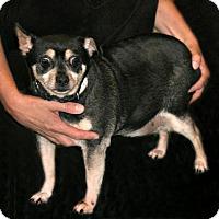 Adopt A Pet :: Chubbs - Lufkin, TX