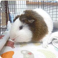 Adopt A Pet :: *Urgent* Louise - Fullerton, CA