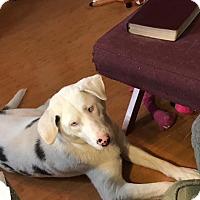 Adopt A Pet :: Sasha - Joliet, IL