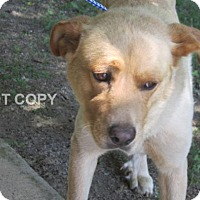 Adopt A Pet :: Jerry - Rocky Mount, NC