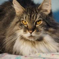 Adopt A Pet :: Binky - Metairie, LA