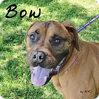 Adopt A Pet :: Bow - Pleasantville, NJ