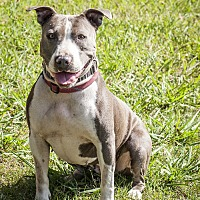 Adopt A Pet :: Heidi - St Helena, CA