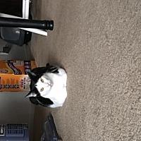 Adopt A Pet :: Felix - Vacaville, CA