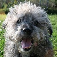 Adopt A Pet :: Arkin - Estherville, IA
