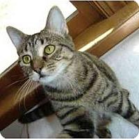Adopt A Pet :: Lana - Richmond, VA