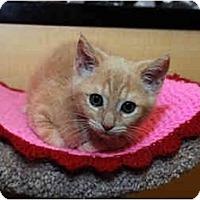 Adopt A Pet :: Bailey - Farmingdale, NY
