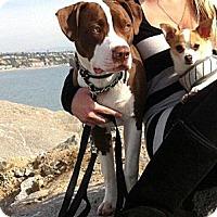 Adopt A Pet :: Royce - Seattle, WA