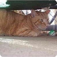 Adopt A Pet :: Jose - El Cajon, CA