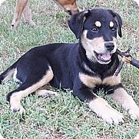 Adopt A Pet :: Hilton - Adamsville, TN