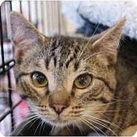 Adopt A Pet :: Rambo - San Ramon, CA