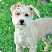 Adopt A Pet :: Bowie - Austin, TX