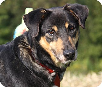 Shepherd (Unknown Type) Mix Dog for adoption in Marietta, Ohio - Betty (Spayed)