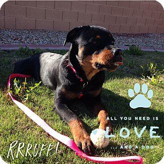 Rottweiler Puppy for adoption in Gilbert, Arizona - JEWELS