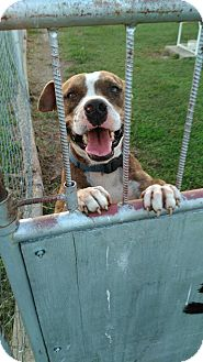 Pit Bull Terrier Mix Dog for adoption in Glenpool, Oklahoma - Bruno