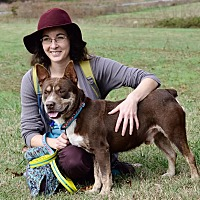Cattle Dog Mix Dog for adoption in Midlothian, Virginia - Gremlin