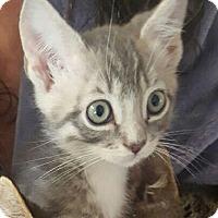 Adopt A Pet :: Levi - Irvine, CA