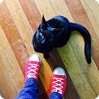 Adopt A Pet :: Gloria Monty - Chicago, IL