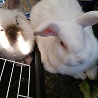 Adopt A Pet :: Rubi - Surrey, BC