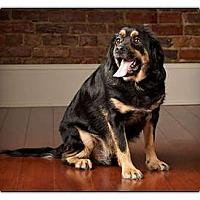 Adopt A Pet :: Alex - Owensboro, KY