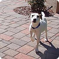 Adopt A Pet :: WIZARD - Scottsdale, AZ
