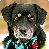 Adopt A Pet :: Gracie - Hastings, NY